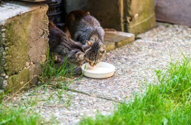 is it a good idea to feed stray cats?