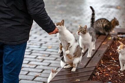will a stray cat starve if I stop feeding it?